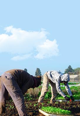 חקלאות בשיתוף הקהילה